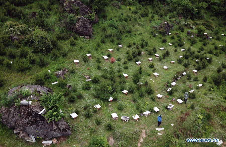 गरिबी घटाउन मह: चीनको गान्सुमा घार स्याहार्दै कृषक