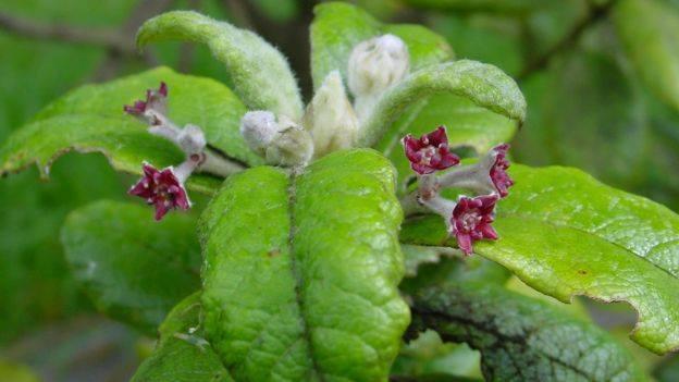दुई शताब्दीयता ५७१ वनस्पती लोप भएको वैज्ञानिक निष्कर्ष
